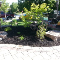 Perennial, shrub & tree planting